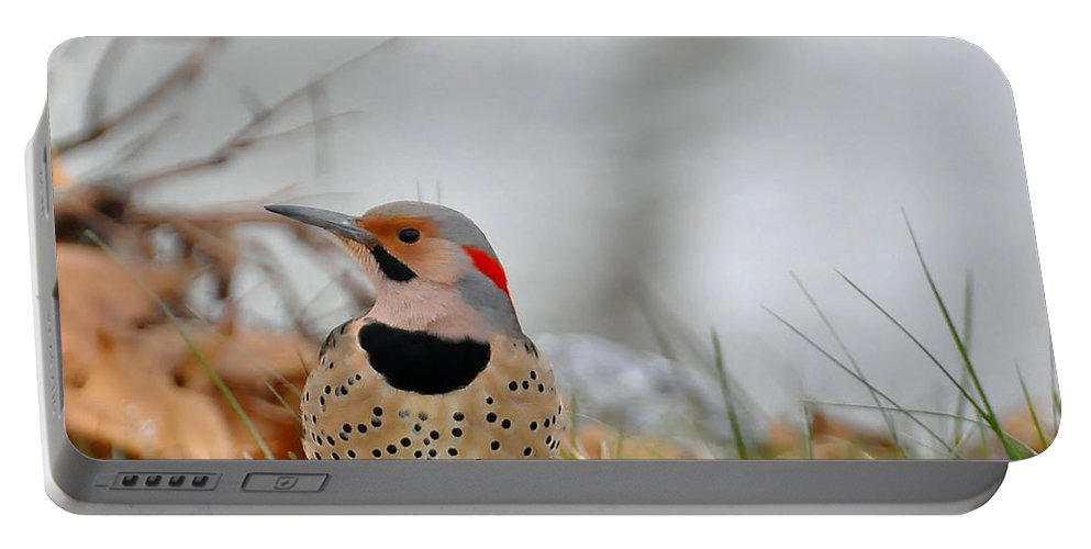Nothern Flicker Portable Battery Charger featuring the photograph Nothern Flicker by Todd Hostetter