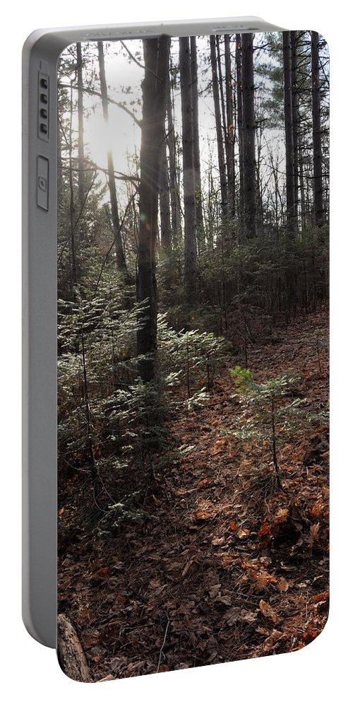 Pine Portable Battery Charger featuring the photograph November In The Pines by Valerie Kirkwood