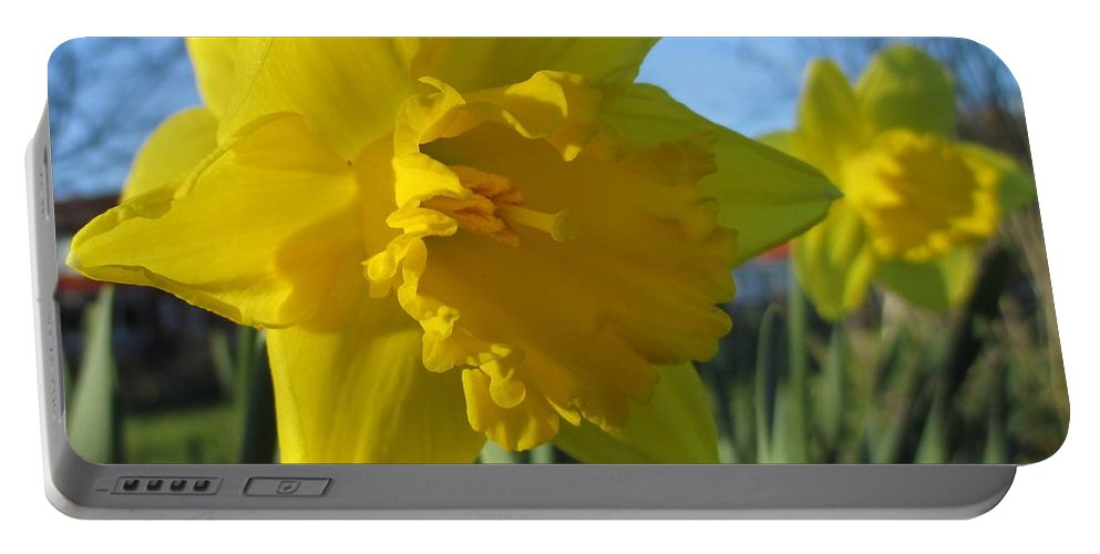 Now That's A Daffodil Portable Battery Charger featuring the photograph Now That's A Daffodil by Martin Howard