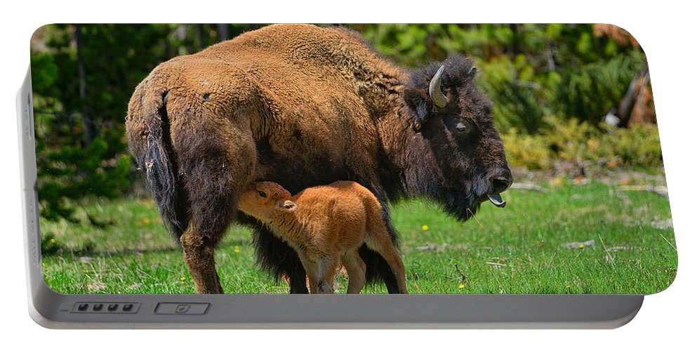 Bison Portable Battery Charger featuring the photograph Nursing Newborn by Greg Norrell