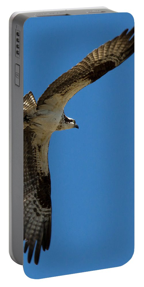 Angles Portable Battery Charger featuring the photograph Obtuse Osprey by John Daly