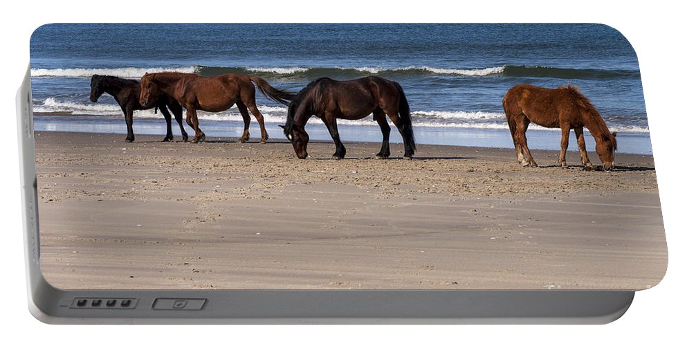 Outer Banks North Carolina Horse Horses Colt Colts Animal Animals Creature Creatures Portable Battery Charger featuring the photograph Odd Man Out by Bob Phillips