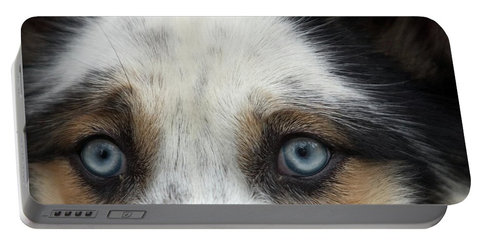 Animal Portable Battery Charger featuring the photograph Old Blue Eyed Dog by John Harmon