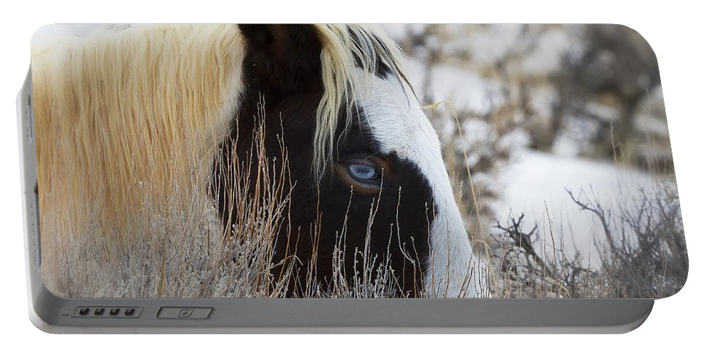 Mccullough Peaks Wild Mustang Portable Battery Charger featuring the photograph Old Blue Eyes by Elaine Haberland