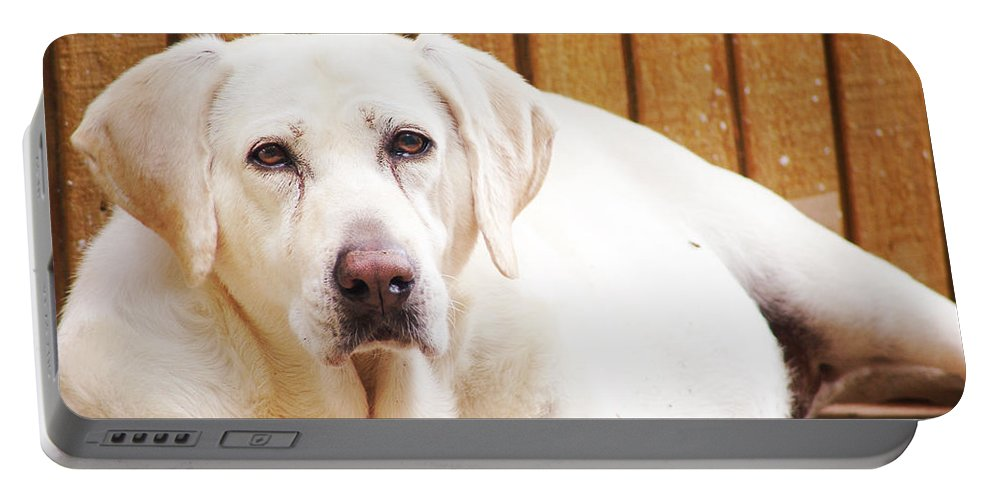 Animals Portable Battery Charger featuring the photograph Old Faithful by Lj Lambert
