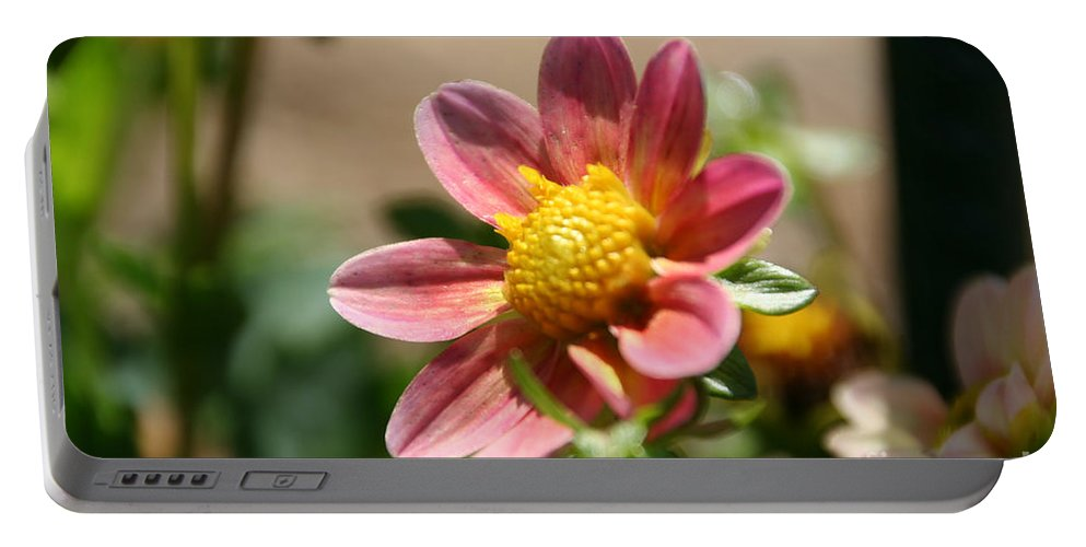 Flower Portable Battery Charger featuring the photograph Old Fashion Dahlia by Susan Herber