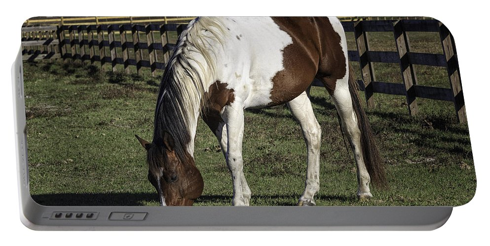 Horse Portable Battery Charger featuring the photograph Old Paint by Fran Gallogly