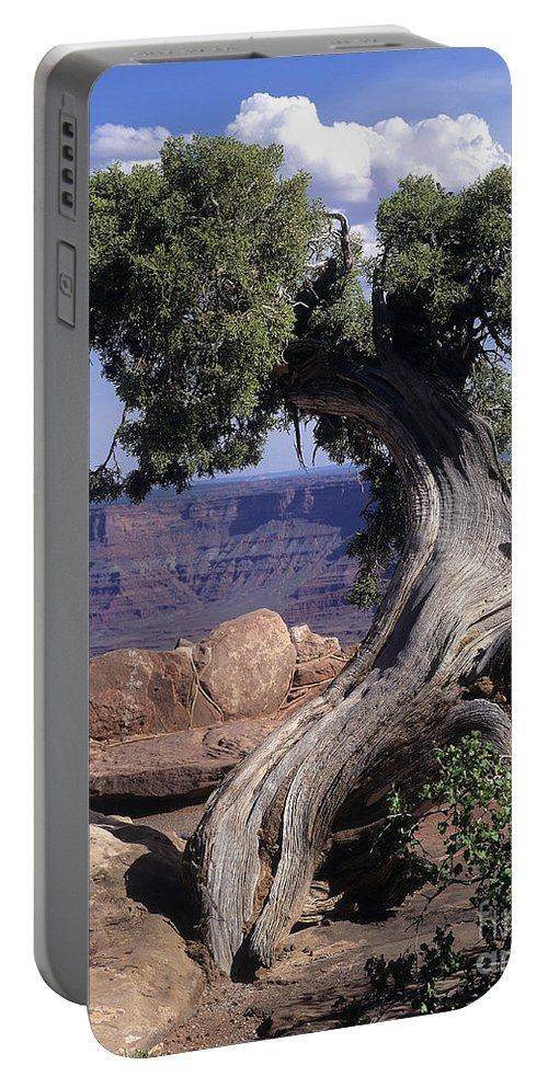 Tree Portable Battery Charger featuring the photograph Old Tree by Judy Bottler