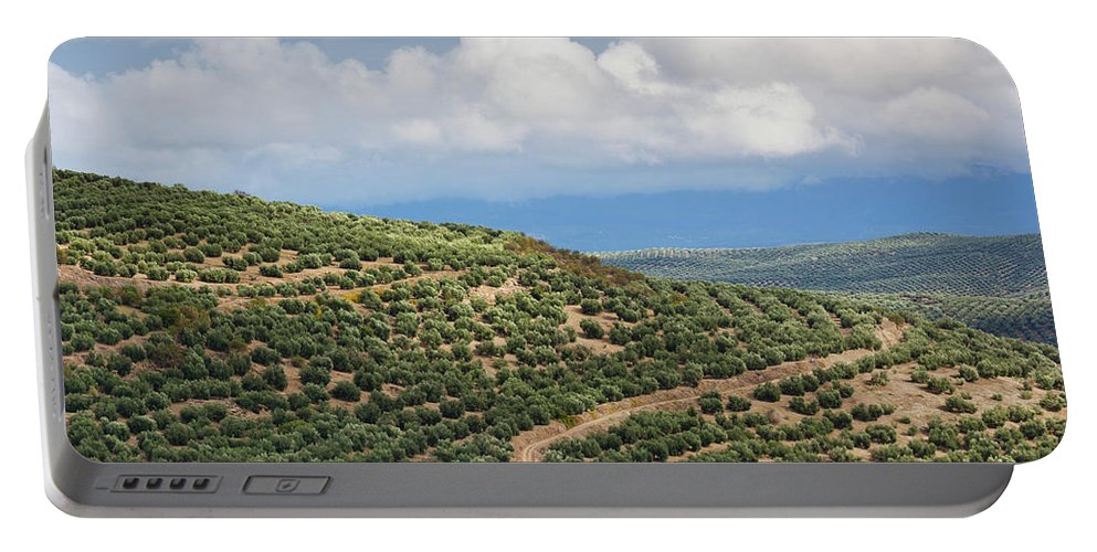 Photography Portable Battery Charger featuring the photograph Olive Trees In A Field, Ubeda, Jaen by Panoramic Images