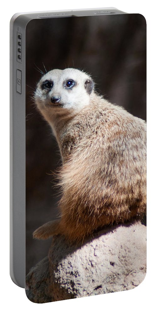 Animal Portable Battery Charger featuring the photograph On Guard by Jill Mitchell