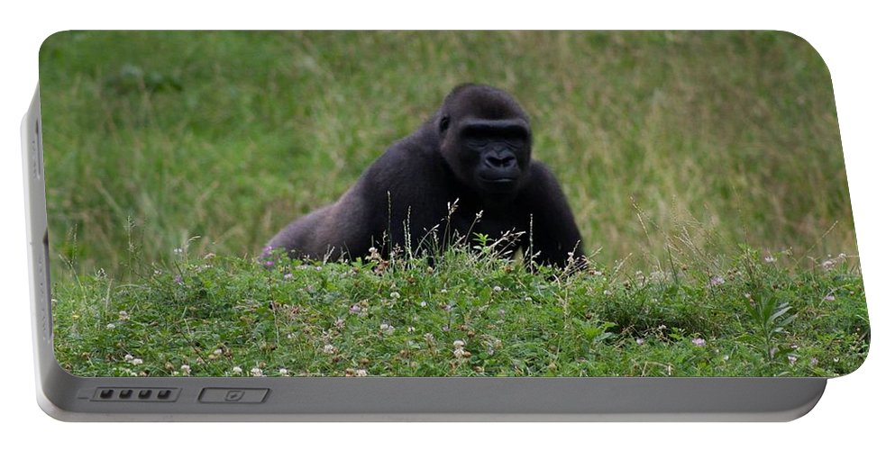 Prowl Portable Battery Charger featuring the photograph On The Prowl by Kathleen Odenthal