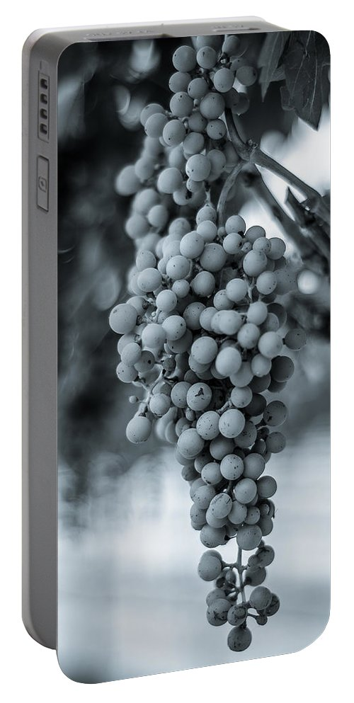 Wine Portable Battery Charger featuring the photograph On The Vine Bw by David Morefield