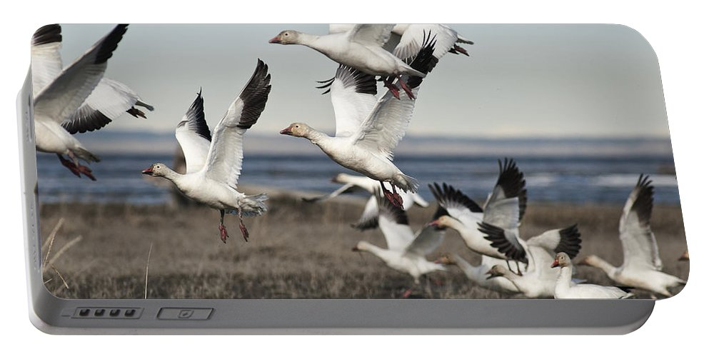 Geese Portable Battery Charger featuring the photograph One After Another by Ted Raynor