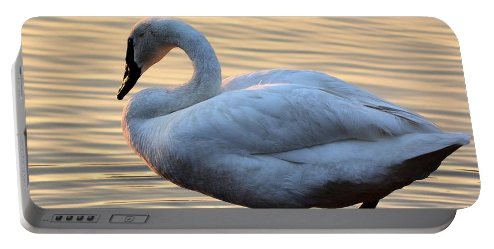 One Portable Battery Charger featuring the photograph One Last Swim by Maria Urso