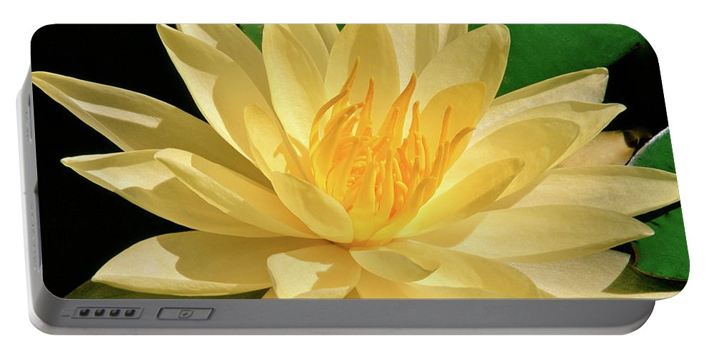 Water Lily Portable Battery Charger featuring the photograph One Water Lily by Ed Riche