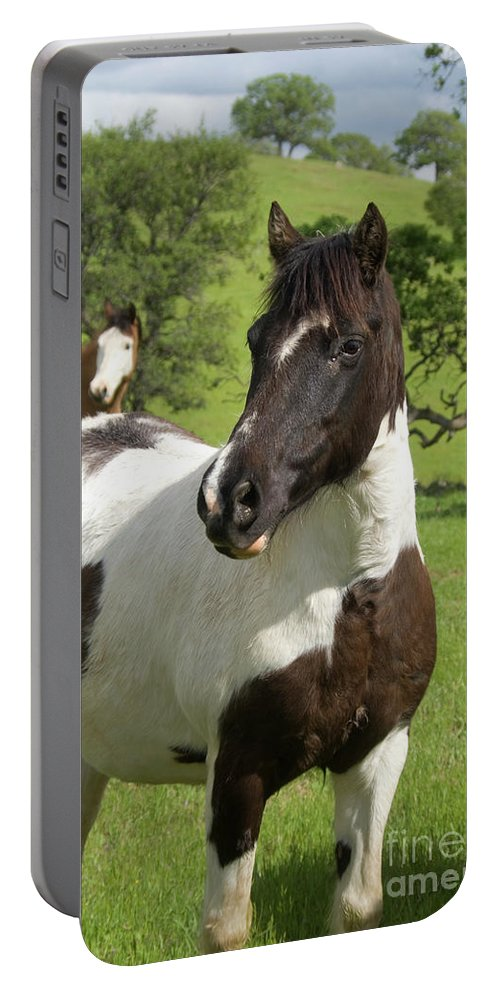 Horse Portable Battery Charger featuring the photograph Onlookers by Jim And Emily Bush