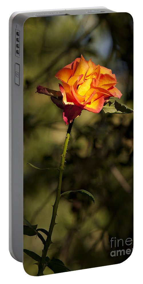 Rose Portable Battery Charger featuring the photograph Orange And Yellow Rose by Jason O Watson