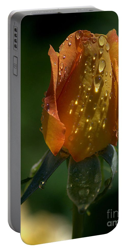 Rose Portable Battery Charger featuring the photograph Orange Bud by Sharon Elliott