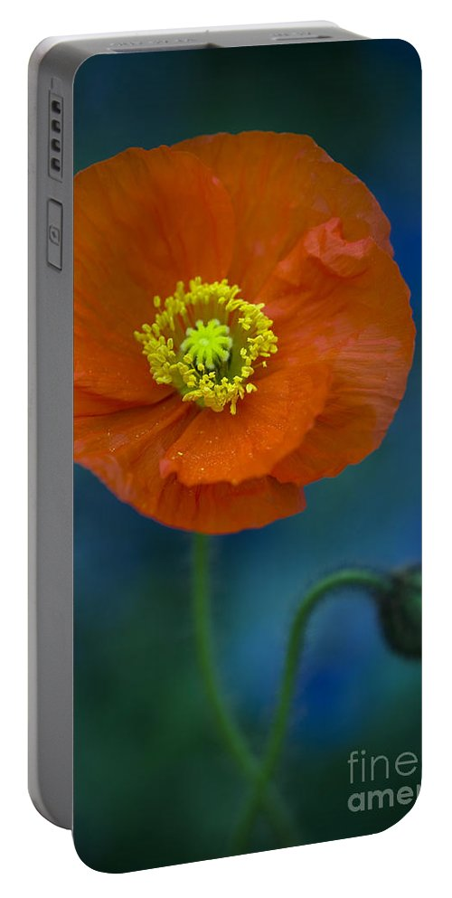 Poppy Portable Battery Charger featuring the photograph Orange Poppy In Flower by Lee Avison