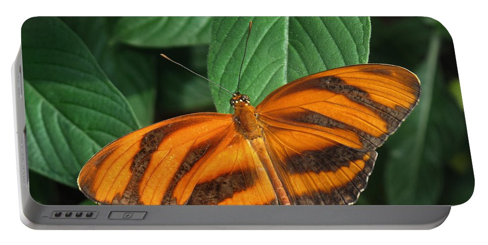 Black Portable Battery Charger featuring the photograph Orange Tiger Butterfly Or Banded Orange by David and Carol Kelly