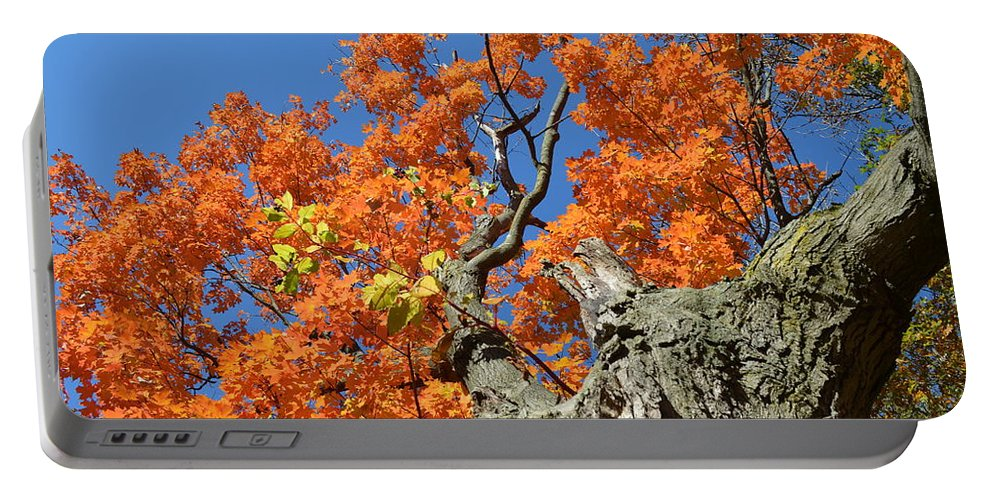 Landscape Portable Battery Charger featuring the photograph Orange Tree by Maja Opacic