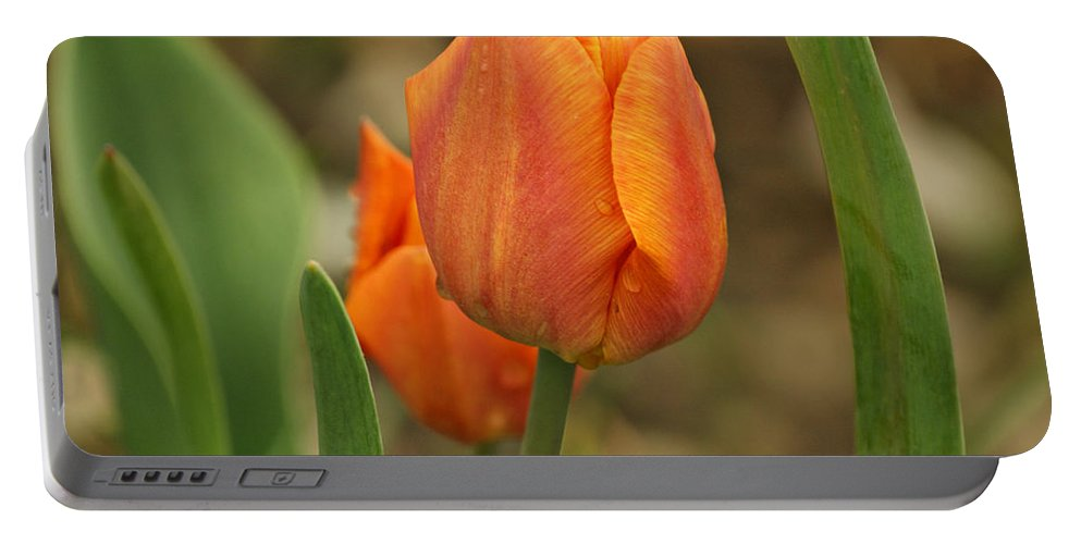 Tulips Portable Battery Charger featuring the photograph Orange Tulip by Sandy Keeton