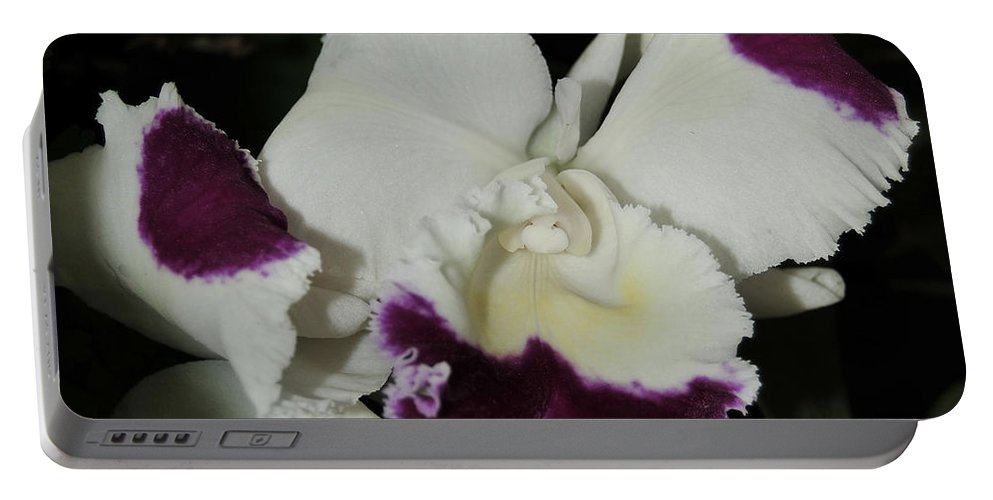 Orchid Portable Battery Charger featuring the photograph orchid 221 Cattleya Moscombe 'The King' 1 of 3 by Terri Winkler