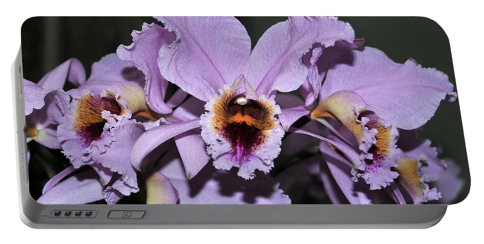 Orchid Portable Battery Charger featuring the photograph Orchid Cattleya Percivaliana Christmas Cattleya by Terri Winkler