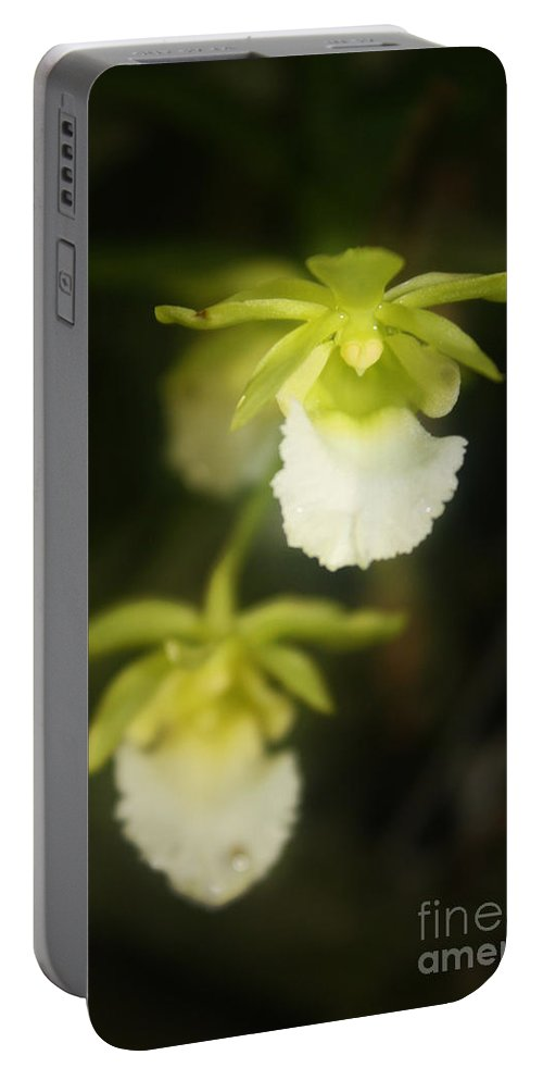 Flower Portable Battery Charger featuring the photograph Orchids Dance by Irina Davis