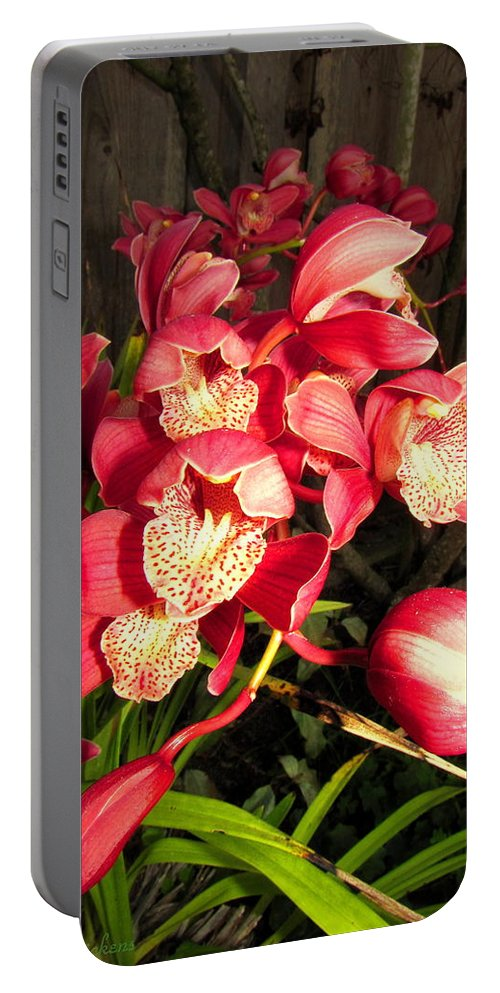 Orchids Portable Battery Charger featuring the photograph Orchids Galore by Joyce Dickens