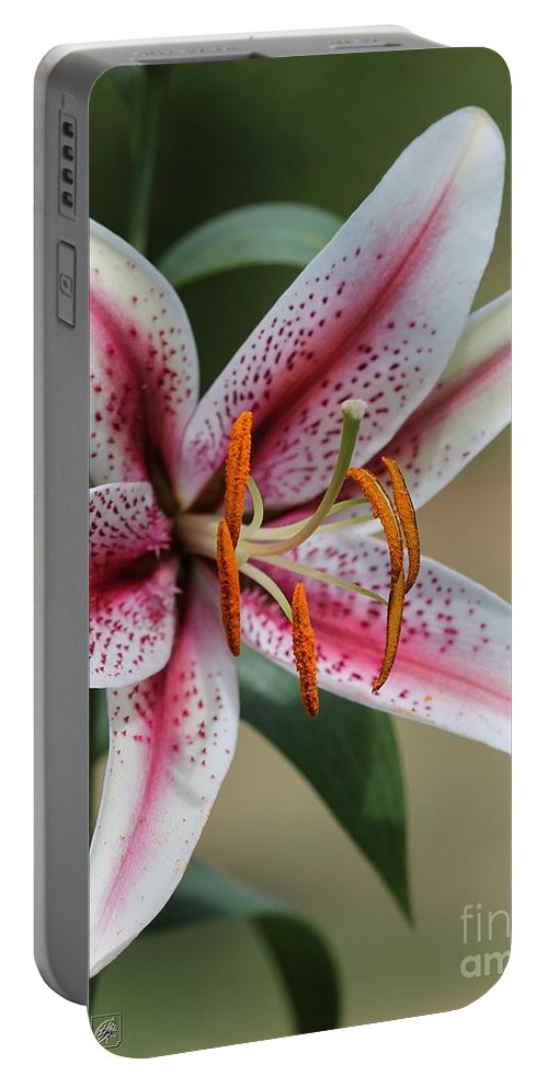 Mccombie Portable Battery Charger featuring the photograph Oriental Lily Named Tiger Edition by J McCombie