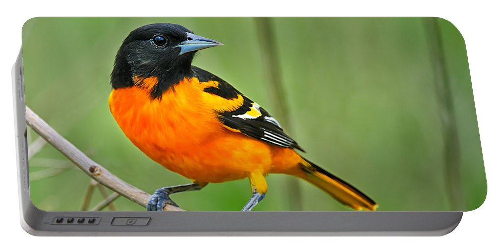 Oriole Portable Battery Charger featuring the photograph Oriole Perched by Timothy Flanigan