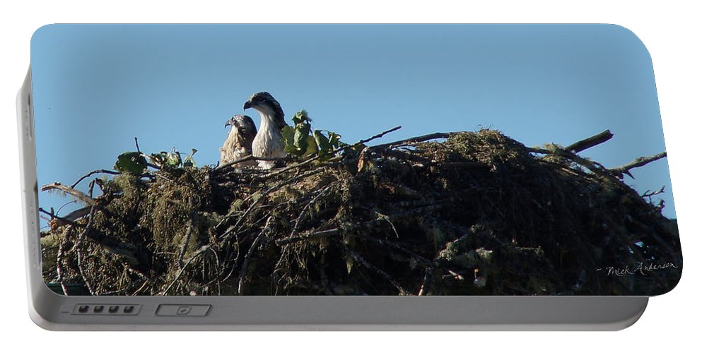 Birds Portable Battery Charger featuring the photograph Osprey Chicks In Nest by Mick Anderson