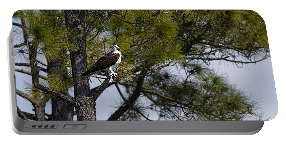 Osprey Portable Battery Charger featuring the photograph Osprey by David Arment