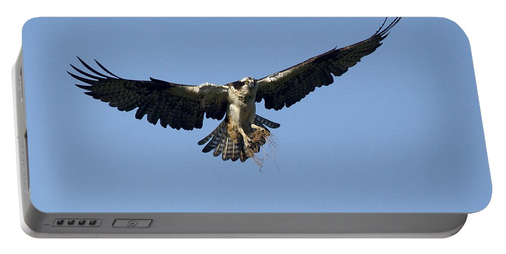 Doug Lloyd Portable Battery Charger featuring the photograph Osprey by Doug Lloyd