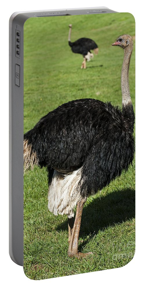 Common Ostrich Portable Battery Charger featuring the photograph Ostrich 1 by Arterra Picture Library