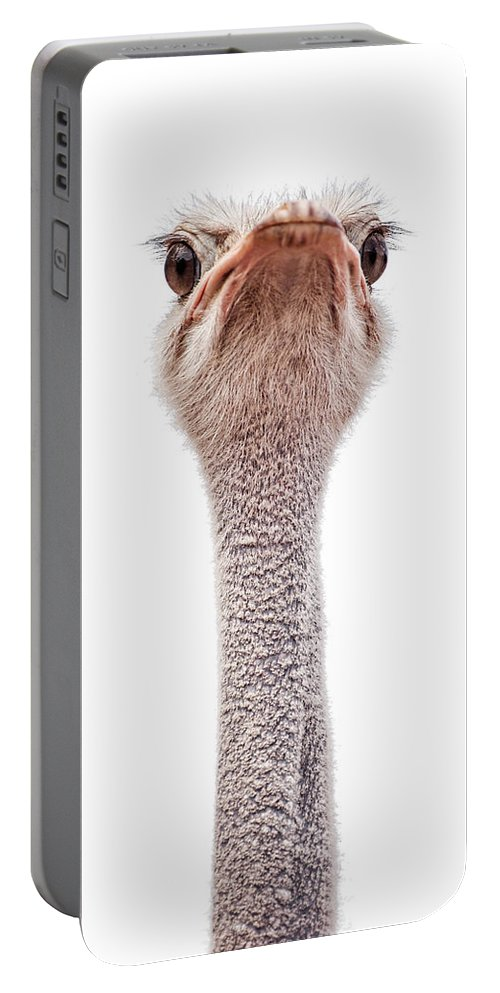 Animal Portable Battery Charger featuring the photograph Ostrich by Leslie Banks