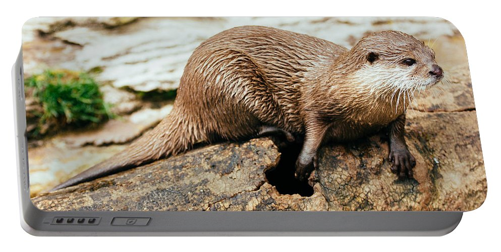 Otter Portable Battery Charger featuring the photograph Otter On A Tree by Pati Photography