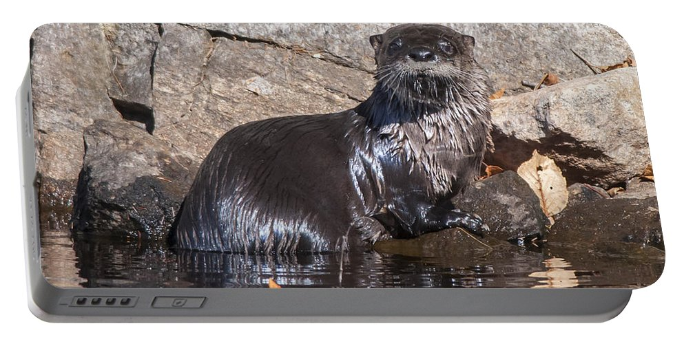 Otter Portable Battery Charger featuring the photograph Otter Posing by Richard Kitchen
