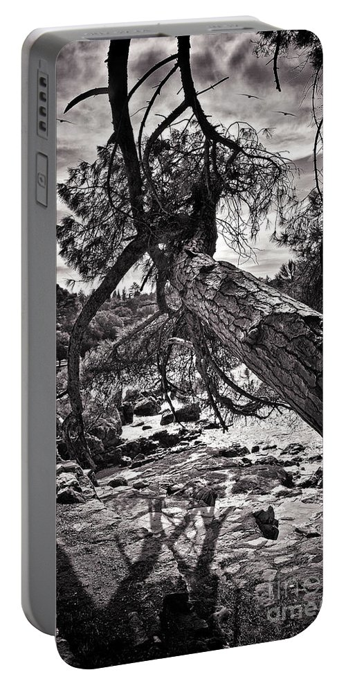 Tree Portable Battery Charger featuring the photograph Out On A Limb by Madeline Ellis