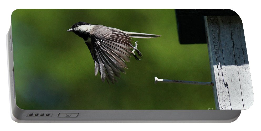 Chickadee Portable Battery Charger featuring the photograph Outgoing by Douglas Stucky