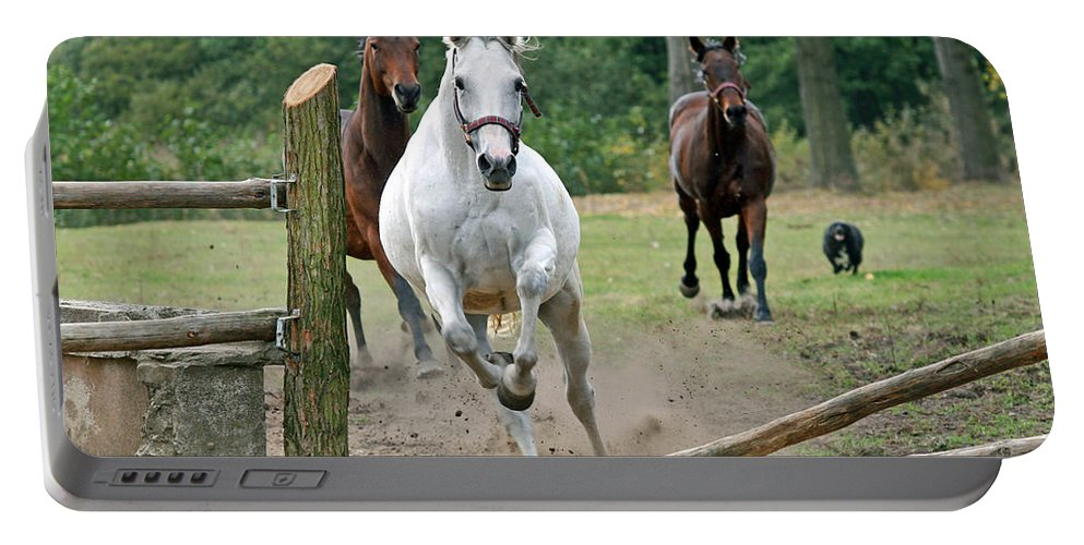 Horse Portable Battery Charger featuring the photograph Over The Fence by Angel Ciesniarska