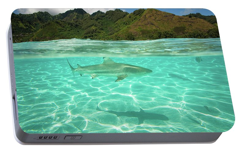 Photography Portable Battery Charger featuring the photograph Over Under, Half Water Half Land, Shark by Panoramic Images