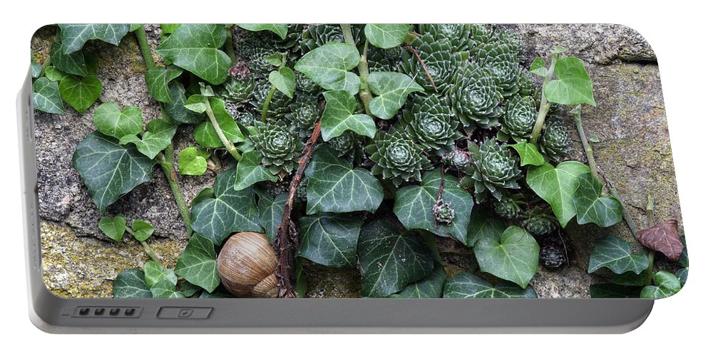 Snail Portable Battery Charger featuring the photograph Overgrown Wall With Snail by Michal Boubin