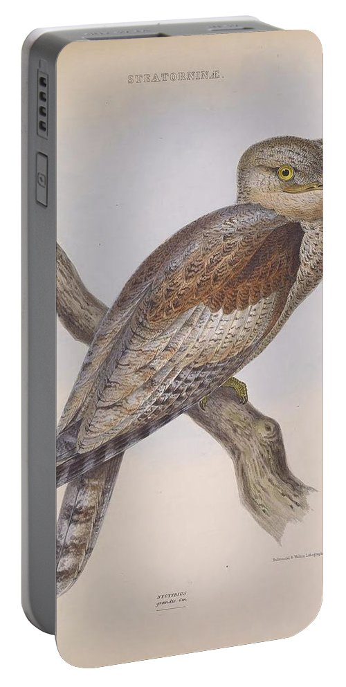 Audubon Portable Battery Charger featuring the painting Owl Steanorninae by Philip Ralley