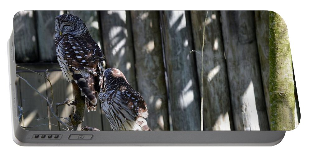 Owl Portable Battery Charger featuring the photograph Owls by Linda Kerkau