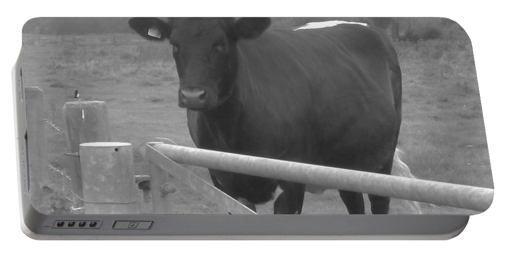 Bull Portable Battery Charger featuring the photograph Oxlease Bull by John Williams