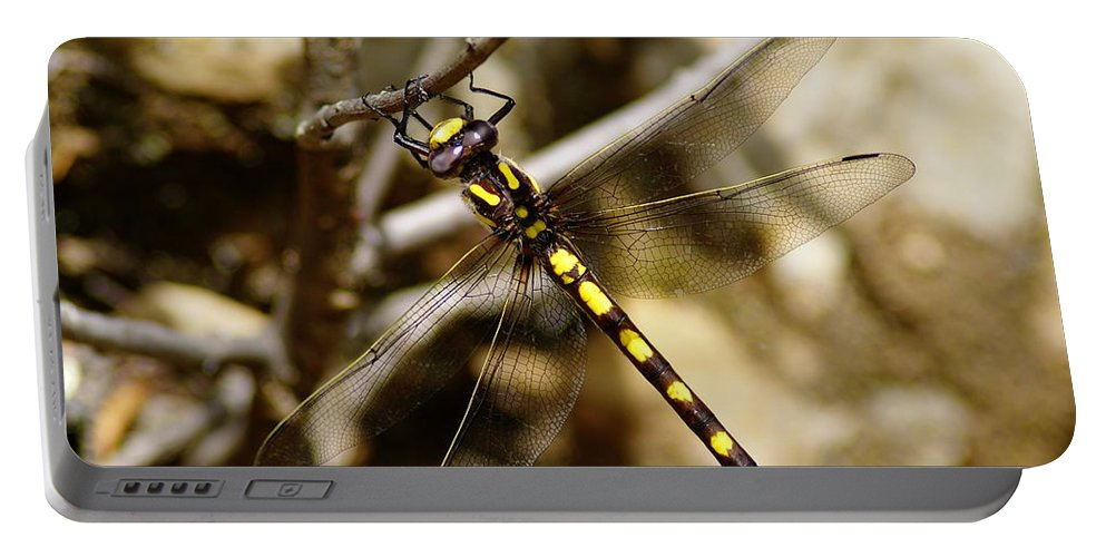 Dragonflies Portable Battery Charger featuring the photograph Pacific Spiketail Dragonfly On Mt Tamalpais by Ben Upham III