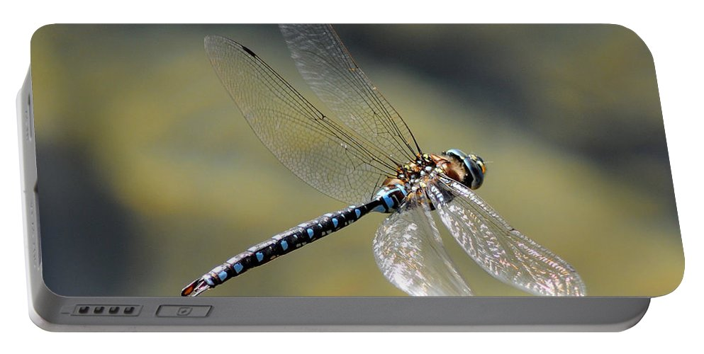Wildlife Portable Battery Charger featuring the photograph Paddletail Darner In Flight by Vivian Christopher