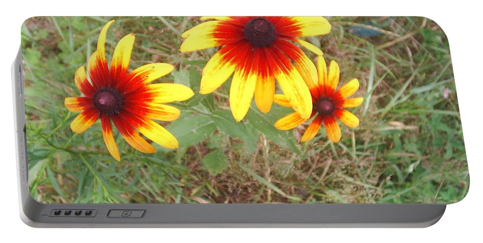 Painted Daisies Portable Battery Charger featuring the photograph Painted Daisies by Jeannie Atwater Jordan Allen